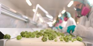 Marijuana stocks have cost traders betting against them nearly $200 million in February (CGC, ACB, CRON, TLRY)